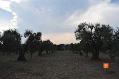 terreno-oliveto-crispiano-vendita-locazione-aste-giudiziarie-appartamenti-case-ville-trulli-casali-masserie-magazzini-depositi-terreni-beni-immobili-mediareimmobiliare